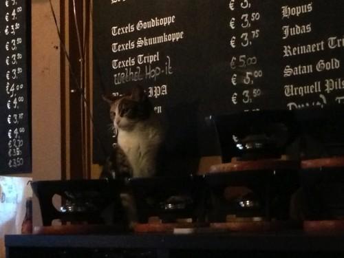 brew_cat